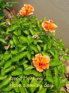Smiley, Good Morning, Herbs, Day, Plants, Bom Dia, Buen Dia, Bonjour, Herb