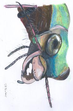 Beetles face. Cicindela sp. Tiger beetle.