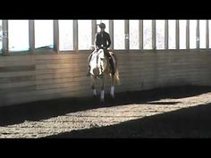 Serena Horse Videos, Equestrian, Horses, World, The World, Horseback Riding, Hunter Jumper, Horse, Words