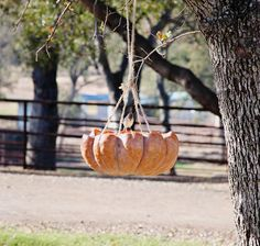 pumpkin bird feeder great for chickens too!