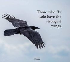 Those who fly solo have the strongest wings One Love Quotes, Freedom Quotes, Success Quotes, Freedom Meaning, Motivational Quotes, Inspirational Quotes, Wise Person, Postive Quotes, English Quotes