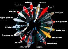 Carpas Nishikigois Ornamentais - Itajubá/MG - (35) 99147-4047