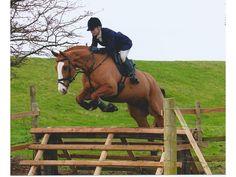 Schoolmaster eventer / fantastic hunter for sale | HorseDeals.co.uk