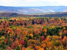 When you think of leaf-peeping New England undeniably comes to mind, but those not residing in the Northeast need not miss out on fall's brilliant burnt orange, golden yellow and red hues.