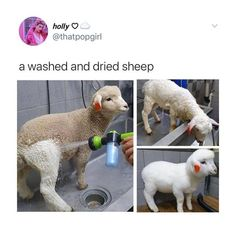 """Only on the hard day. Comment if you been through Please pin it on these board """"funny"""" """"humour"""" """"memes"""" funhumour"""" """"picture"""" this 20 Cute Animal Memes, Animal Jokes, Cute Funny Animals, Funny Animal Pictures, Funny Cute, Cute Pictures, Hilarious, Clean Animal Memes, Cute Little Animals"""