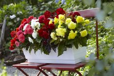 Non-Stop Begonia Bulbs Collection Brighten up a shady porch, patio or entryway with a rainbow of colorful flowers. Non-stop begonias are compact, shade-loving p Shade Plants, Potted Plants, Colorful Flowers, Beautiful Flowers, Tuberous Begonia, Spring Plants, World Of Color, Growing Plants, Shade Garden