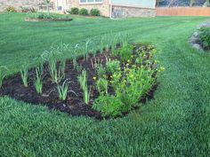 Prairie Gardens & Rain Garden Contractors in Wayne County, MI Prairie Garden, Wayne County, Rain Garden, Sustainability, Landscape, Green, Plants, Healthy, Scenery