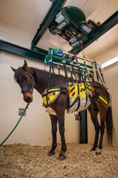Robotic Lift Offers New Hope for Injured Horses - Wide Open Pets Horse Stables, Horse Farms, Horse Tack, Dream Stables, Dream Barn, Types Of Horses, Vet Clinics, Veterinary Medicine, Equestrian Outfits