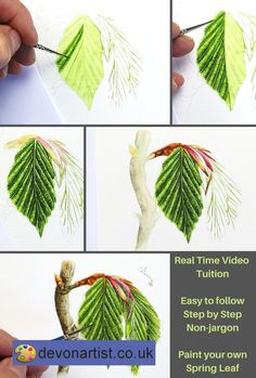 Real-time watercolor video tutorial on painting spring leaves in realistic detail. The video takes you through every stage of this painting with masses of verbal guidance as I paint the same picture. . #PaulHopkinson #TheDevonArtist #botanicalpainting #botancialwatercolor #botanicalpaintinglessons #onlinewatercolor #onlinewatercolour #paintingschool #watercolorschool #watercolourschool #onlinearttutor #howtopaintleaves #howtopaintaleaf #leafpainting #paintingleaves