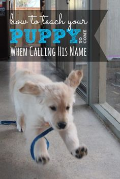 If you've already named your puppy then it's time to learn how to teach your puppy his name. Teaching your puppy his name can save his life...literally.