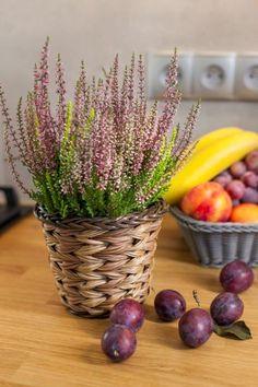 #autumn #galicja #heather #plum #fruits #violet