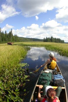 Overnight Trip Packages Archives - Algonquin Outfitters - Your Outdoor Adventure Store Outdoor Adventure Store, Algonquin Park, Canoe Trip, Park Homes, Conte, Day Trip, Scenery, Trout, Paddle