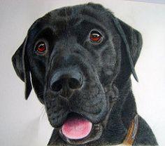Labrador Drawing | Drawing of a black labrador. | maria moss | Flickr