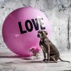 5 foot Big Love Ball with Tuna | Color : Femmebot | Photo by Bob Garlick
