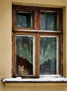 Russia  =^.^= CÅt§ in The Window