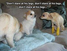 You Got New Legs, Lt. Dawg Still laughing!!!!!