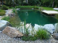 swimming pond - Garten - Women's Need
