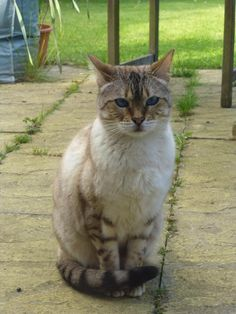 Linus Cat