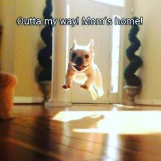 My husband @burlybhob sent this to me yesterday and I just had to share it here because it's so cute and true. This is totally my dog when I get home. It's wonderful to have someone so excited when I get home. He sticks to me like glue. We're buddies #loyal #dog #excited #momshome #cute #familypet #lapdog #terriermix #funny #humor https://instagram.com/p/BA2tsGBu1KF/