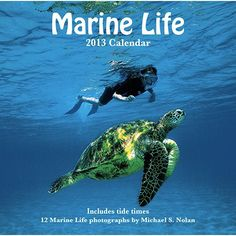 Marine Life Wall Calendar: This wall calendar for 2013 features spectacular photographs of Hawaii's humpback whales, playful dolphins, and green sea turtles. These rare images of Hawaii's natural marine life were shot by renowned marine photographer Michael Nolan.  $13.99  http://calendars.com/Sea-Life/Marine-Life-2013-Wall-Calendar/prod201300019297/?categoryId=cat00345=cat00345#