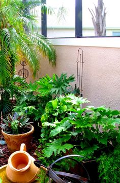 Courtyard Gardening No Minimalist Here June 2017 Container Florida Porch And