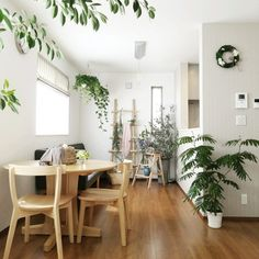 moniさんの、部屋全体,観葉植物,無印良品,ナチュラル,IKEA,ダイニング,カーテン,ソファ,シェードカーテン,ユーカリ,ハンギング,エバーフレッシュ,ラダー,ナチュラルフレンチ,丸テーブル,花のある暮らし,NO GREEN NO LIFE,お花のある暮らし,ラウンドテーブル,のお部屋写真 Muji Style, Circle Table, 1 Bedroom Apartment, Green Flowers, Small Living, Beautiful World, Home Kitchens, Sweet Home, Kitchen Cabinets