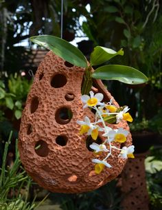 Distinctive Gifts Mean Long Lasting Recollections Beautiful Hanging Garden Planter. Ideal For Orchids, Succulents, Tillandsias. Rock Planters, Orchid Planters, Orchids Garden, Garden Planters, Hanging Orchid, Hanging Plants, Mini Orquideas, Orchid Roots, Growing Orchids