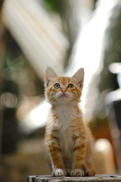 cat Ginger Cats, Cat Love, Cats And Kittens, Life Is Good, Dog Cat, Survival, Dogs, Animals, Boards