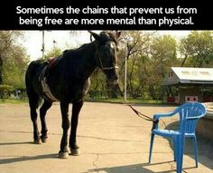 This is true if horses knew how strong they were we would not be able to overpower them.
