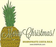Tweets con respuestas por BribriFruits (@BriBriFruits) | Twitter Piñas ,pineapples ,ananas de Costa Rica ,frutas tropicales ,fruits ,mercabarna ,piñasdecostarica, mercamadrid@bribrifruitscostarica #piñas #pineapple #pineapples #ananas #frutastropicales #dieta #nutricion #salud #costarica #caribe #puravida #instanfood #piñasdecostarica #fruterias #mercados #mercamadrid #mercabarna #mercasevilla #spain #bribrifruits #disfrutadelapiña