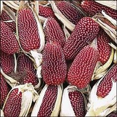 Fruit And Veg, Fruits And Vegetables, Strawberry Popcorn, Glass Gem Corn, Popcorn Seeds, White Popcorn, Red Plants, Organic Seeds, Sweet Corn