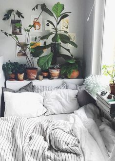 urban outfitters bedroom + indoor plant + succulent ideas for the bedroom | boho bedroom dorm room ideas #homedecorideas