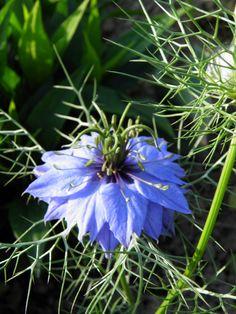 """""""Različak"""" Garden, Plants, Garten, Lawn And Garden, Gardens, Plant, Gardening, Outdoor, Yard"""