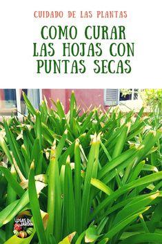Kitchen: Top 14 (Delicious) Hot Sauce Recipes You Can Make Garden Paths, Garden Landscaping, Garden Law, Organic Gardening, Gardening Tips, Urban Gardening, Plantas Indoor, Hot Sauce Recipes, Cannabis Plant