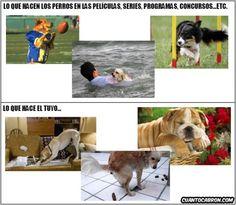 Qué hacen y cómo son los perros en la pequeña y gran pantalla y qué hace y cómo es el tuyo        Gracias a http://www.cuantocabron.com/   Si quieres leer la noticia completa visita: http://www.estoy-aburrido.com/que-hacen-y-como-son-los-perros-en-la-pequena-y-gran-pantalla-y-que-hace-y-como-es-el-tuyo/