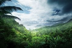 Rain Forest Tea. Tropical paradise in your cup.