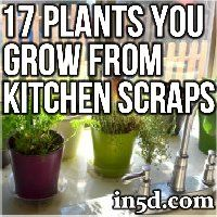 Here is a fun way to grow your own organic NON GMO food from common kitchen scraps!