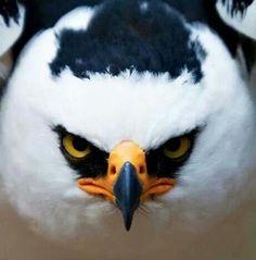 Angry bird !
