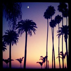 Sunset. Palm trees. The moon. Santa Monica. by ...love Maegan, via Flickr