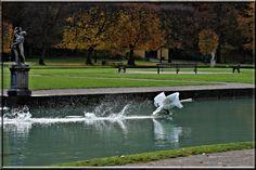 Im Schlosspark Hellbrunn Golf Courses, Sports, Water, Hs Sports, Sport