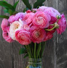 Pops of pink ranunculus. #loveisinbloom