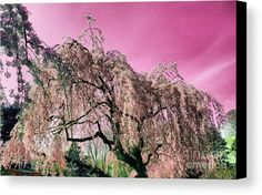 Pink Paradise Canvas Print by Onedayoneimage Photography.  All canvas prints are professionally printed, assembled, and shipped within 3 - 4 business days and delivered ready-to-hang on your wall. Choose from multiple print sizes, border colors, and canvas materials.