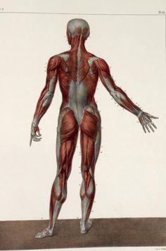 Obras inspiradas: Imágenes Anatomía