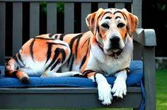 """Résultat de recherche d'images pour """"animaux mignon mais dangereux"""""""