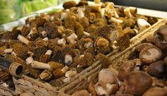 Frische Morcheln und Shiitake-Pilze