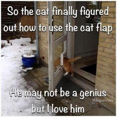 Funny Animal Pictures, Cute Funny Animals, Funny Cute, Cute Cats, Cute Pictures, Hilarious, Cat Fun, Crazy Cat Lady, Crazy Cats