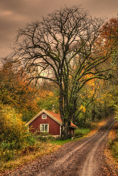 ~~Autumn at the cottage ~ Sweden by Almqvist Photo~~