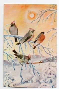 P.Lillo-Stenberg Christmas Bird, Vintage Postcards, Sweden, Auction, Coral, Magic, Painting, Animals, Art