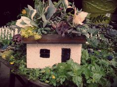 succulant fariy house | @ www.sailersgreenhouse.com