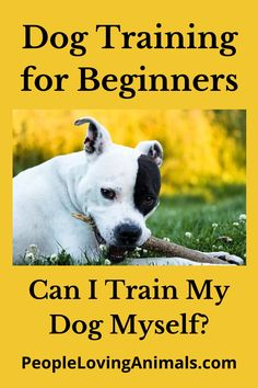 Dog Training for Beginners - Can I Train My Dog Myself? Puppy training for beginners, dog training at home, puppy training at home, dog training tips, puppy training tips, dog obedience training for beginners, puppy obedience training for beginners Puppy Toilet Training, Puppy Obedience Training, Dog Training Videos, Puppy Biting, Aggressive Dog, Dog Barking, Pet Lovers, Dog Owners, Pet Care